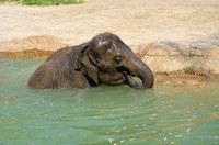 Elephants love water